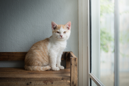 Cute bicolor kitten sitting and looking on old wood shelf