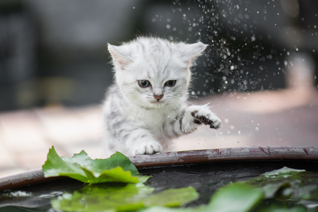 Cute kitten shakes the water off its leg