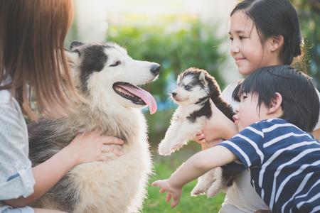 Aziatische familie spelen met Siberische Husky hond samen Stockfoto