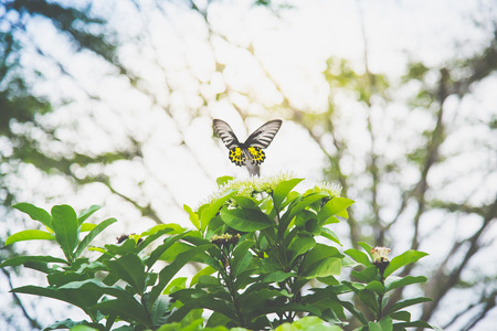 Close up of butterfly flying in the park
