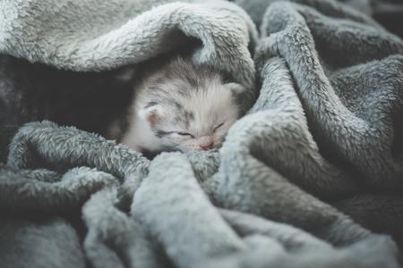 Newborn kitten sleeping under wool blanket