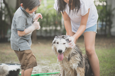 Asian children wash siberian huskydog on summer day