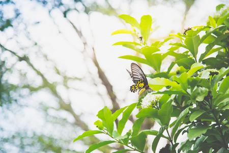 Chiuda in su della farfalla sul fiore bianco nel parco Archivio Fotografico - 87489804