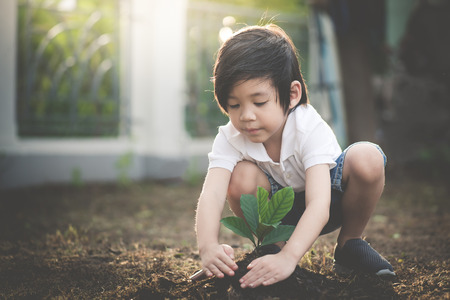 Cute Asian child planting young tree on the black soil Zdjęcie Seryjne - 87489806