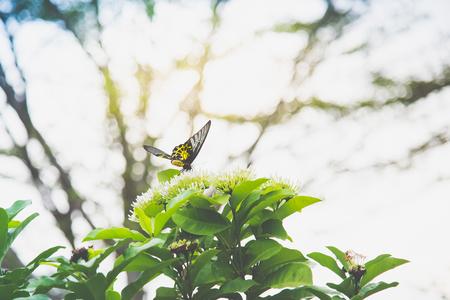 Chiuda in su della farfalla sul fiore bianco nel parco Archivio Fotografico - 87489826