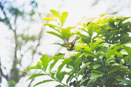 Chiuda in su della farfalla sul fiore bianco nel parco Archivio Fotografico - 87489830