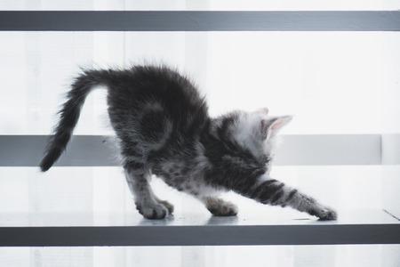 windows: Cute kitten sitting on white wooden shelf