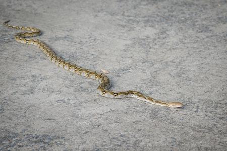 具体的な道路のボア蛇のクローズ アップ