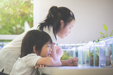 Cute Asian children enjoy  watching fish tank on a table together