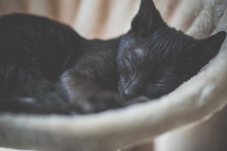 Gatito negro lindo que duerme en la torre del gato Foto de archivo - 91123555
