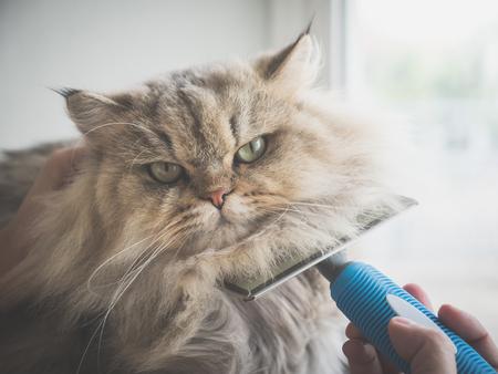 くしブラシを使用したアジアの女性は、ペルシャの猫をブラシ