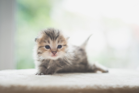 Close up of cute newborn kitten looking at camera