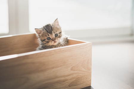 Cute kitten playig in a wooden box under sunlight