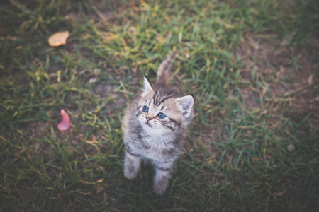 Cute kitten sitting in the garden under sunlight