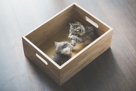 Two Cute kittens playig in a wooden box under sunlight
