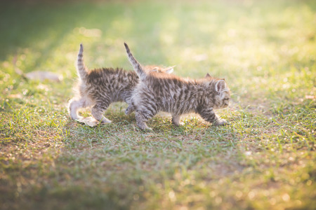 Two Cute kittens playing in the garden under sunlight