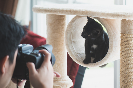 Asian photographer taking a photo of black kitten cat