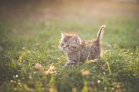 Cute kitten playing in the garden under sunlight