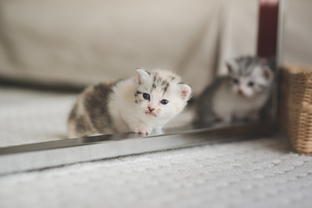 Cute kittens playing in living room