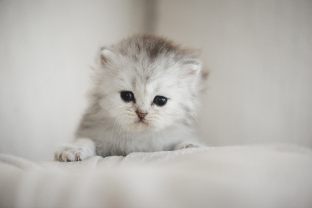 Cute kitten playing on a sofa and look at camera Stock Photo