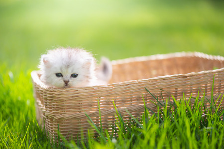 Cute kitten playing in wicker basket on green grass outdoors Foto de archivo - 108196076