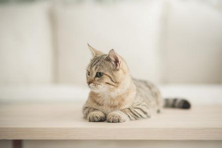 Cute cat lying on wooden table in living room Standard-Bild - 108196936