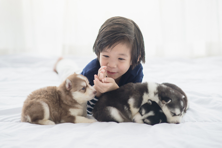 Cute asian child and siberian husky puppies lying on white bed