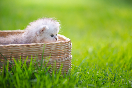 Cute kitten playing in wicker basket on green grass with copy space Stock Photo