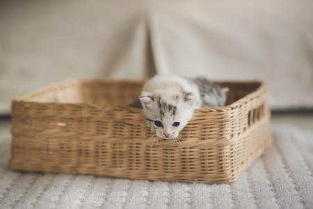 Cute kittens sitting in a basket Stock Photo - 108197139