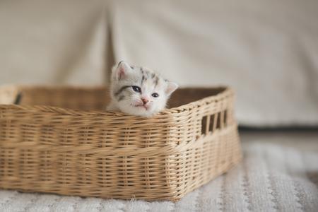 Cute kittens sitting in a basket