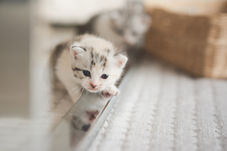 Cute kittens playing in living room Stock Photo - 108197512