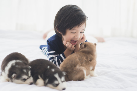 Cute asian child and siberian husky puppies on white bed 写真素材