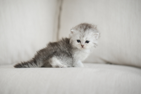 Cute kitten playing on a sofa and look at camera Reklamní fotografie