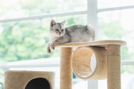 Cute cat lying on cat tower