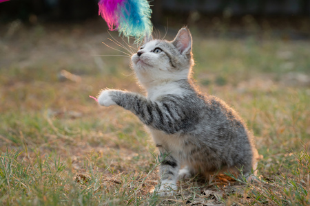 Cute kitten playing toy in the garden Imagens