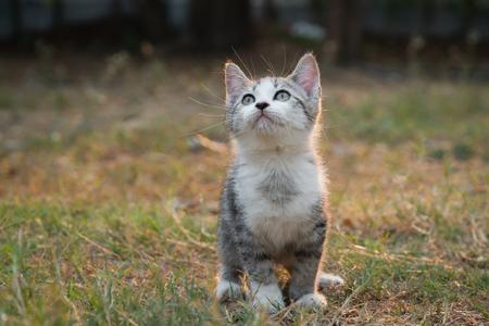 Cute kitten sitting in the garden Imagens