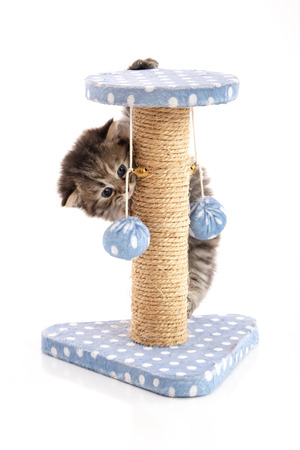Cute tabby kitten playing on a cat tree, isolated on white Stockfoto