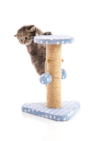 Cute tabby kitten playing on a cat tree, isolated on white Stock Photo