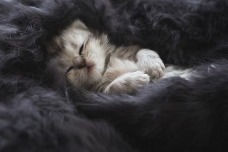 Cute kitten sleeping on black fur
