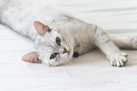 Cute cat lying on white bed