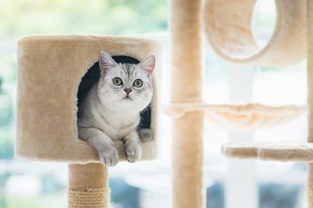 Słodki kot leżący na kociej wieży
