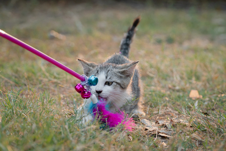 Cute kitten playing toy in the garden