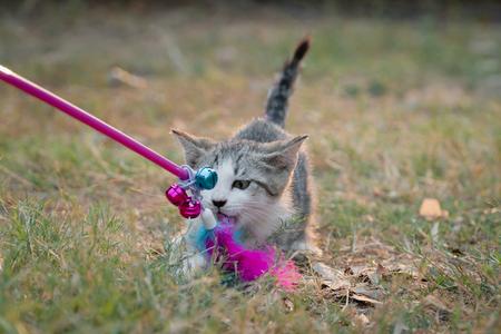 Cute kitten playing toy in the garden Stockfoto