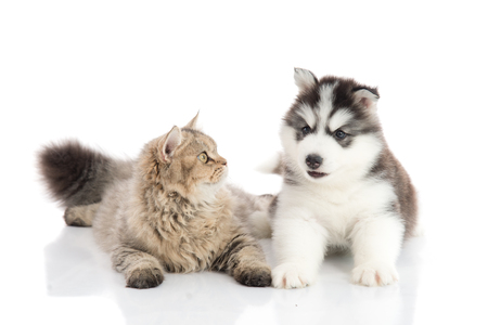 Cat and dog together lying on a white background,isolated
