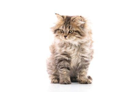 Nahaufnahme von Brown Kätzchen Katze sitzt auf weißem Hintergrund isoliert