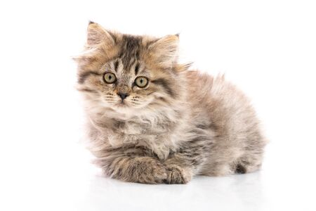 Tabby  kitten cat lying and looking on white background,isolated Stock Photo