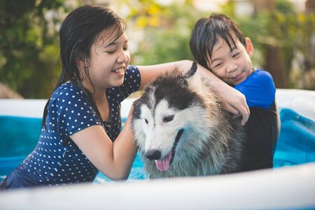 Cute Asian children  playing with siberian husky dog in blue swimming pool 版權商用圖片
