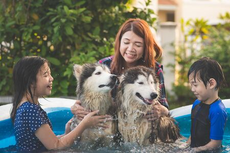 Cute Asian family  playing with siberian husky dog in blue swimming pool 版權商用圖片