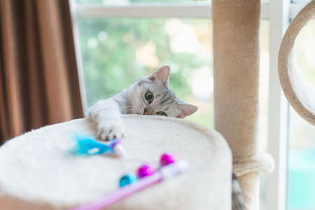 Cute kitten playing toy on cat tower