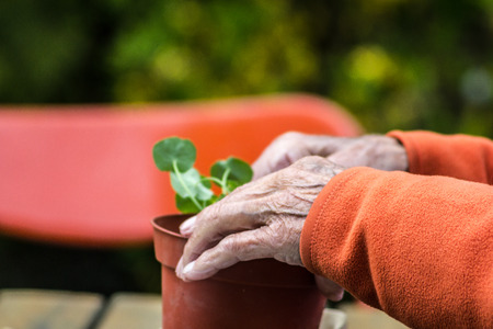 lusty: Tender old hands with life experience plant a tree